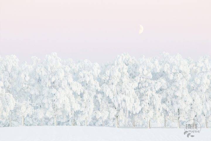 Pink winter magic