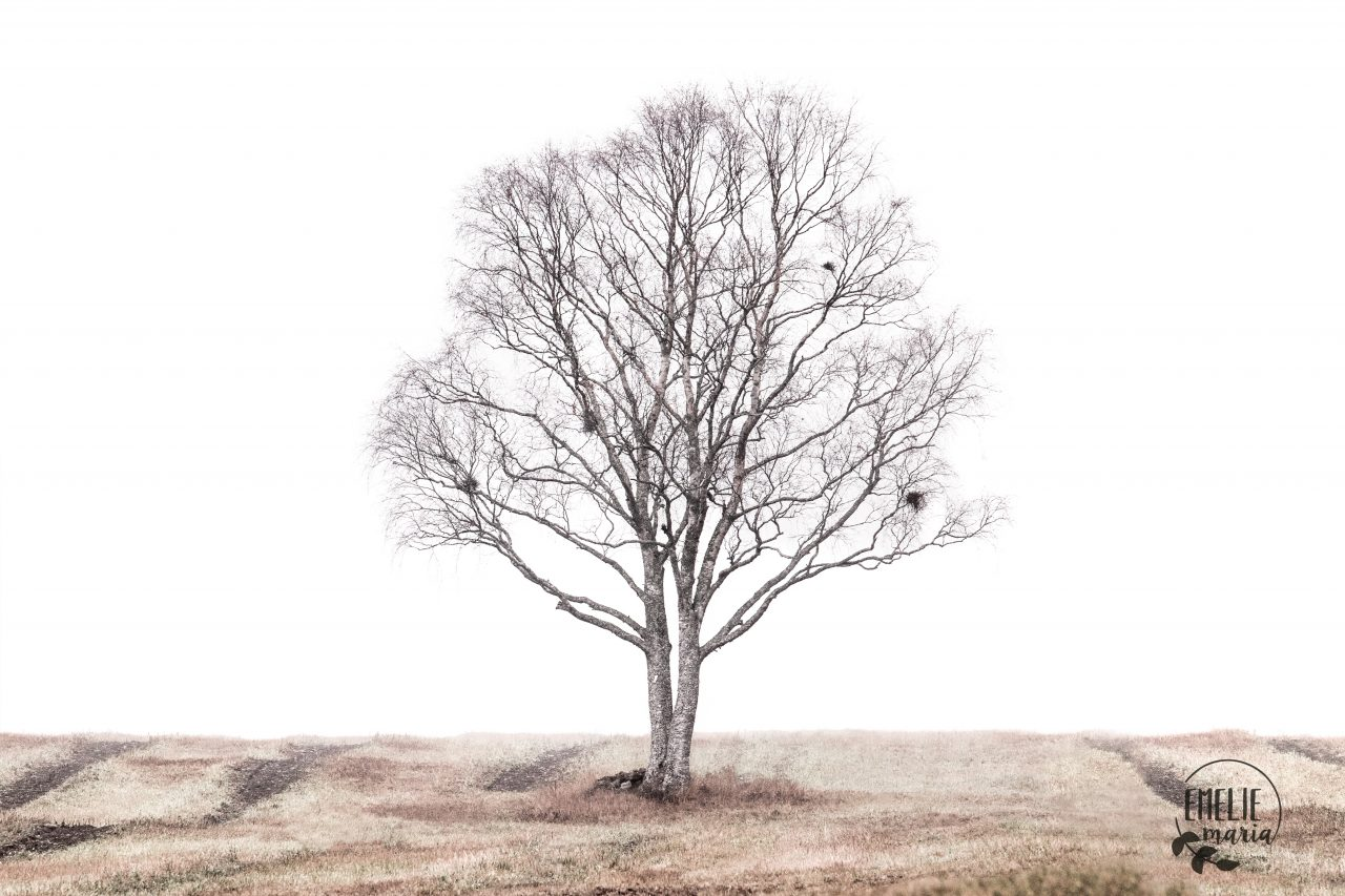 Photo of a beautiful lonely tree.